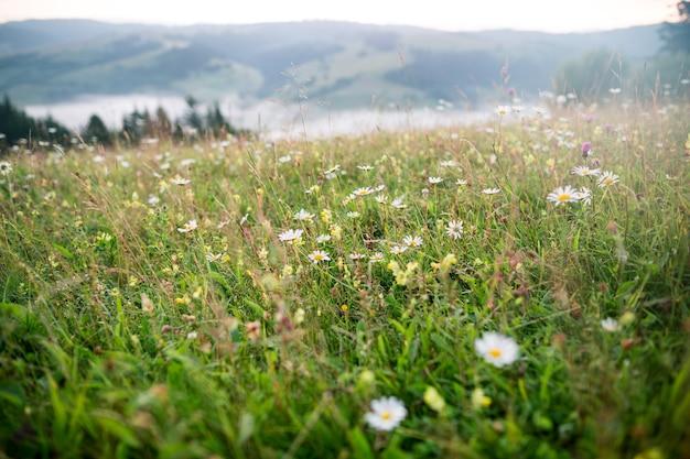 Clairière avec fleurs sauvages et chaîne de montagnes au lever du soleil