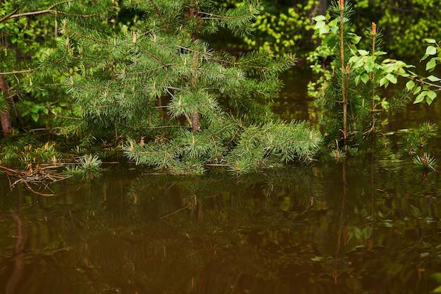 Clairière forestière inondée pendant les hautes eaux du printemps