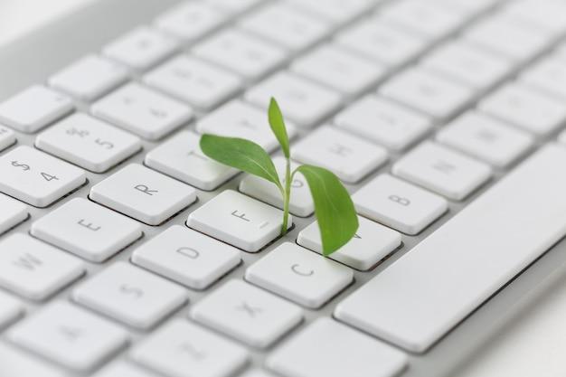Clavier avec petite plante