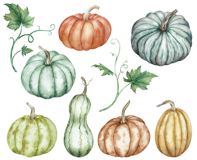 Clipart aquarelle de citrouilles colorées vertes, rouges, orange, bleues et feuilles. collection de thanksgiving de la récolte de citrouilles.