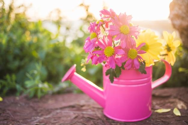 Close-up d'arrosage rose peut avec de jolies fleurs