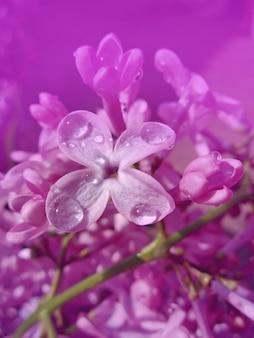 Close-up de belles fleurs lilas