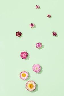 Close-up bourgeon de fleurs colorées sèches, petites fleurs sur vert