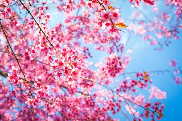 Close-up des branches fleuries