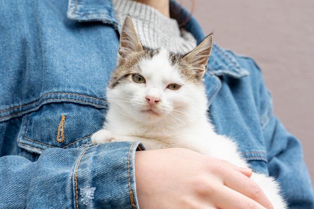 Close-up charmant chat pris en charge par le propriétaire