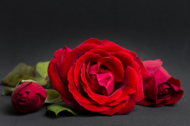 Close-up concept artistique rose rouge