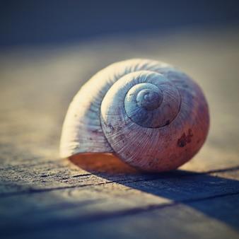 Close-up de la coquille d'escargot sur une planche
