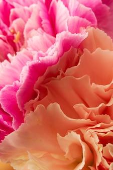 Close-up corail et fleurs de couleur rose