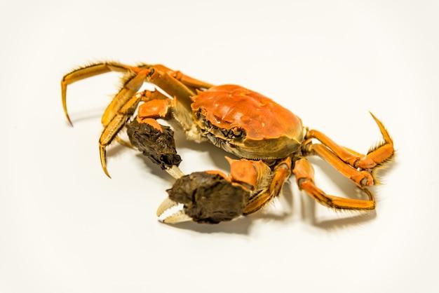 Close-up de crabe
