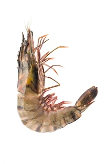 Close-up de la crevette entière