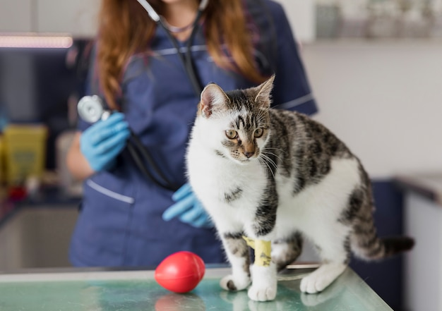 Close-up docteur avec stéthoscope et chat blessé