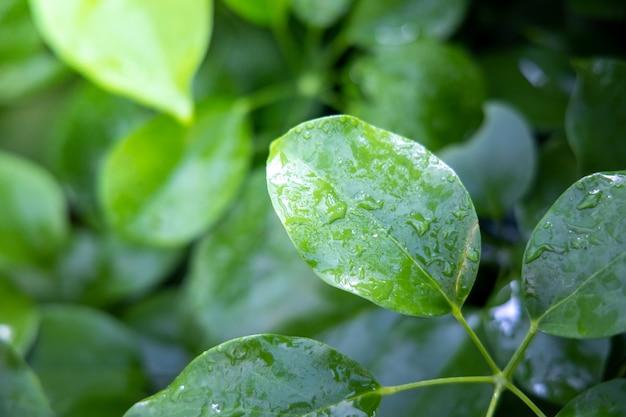 Close up feuille verte sous la lumière du soleil dans le jardin