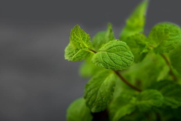 Close up de feuilles de menthe fraîche sur un fond de texture de pierre