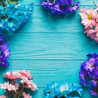 Close-up fleurs colorées