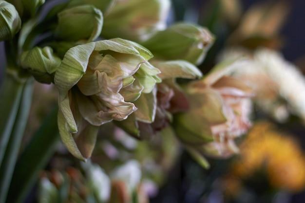 Close-up flower shop window avec des fleurs exotiques