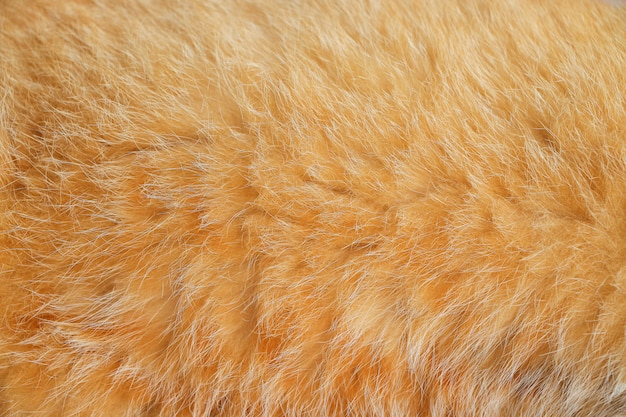 Close up fourrure de chat brun lisse