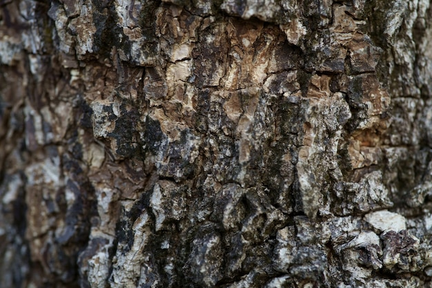 Close up full frame shot vieux fond de texture d'écorce d'arbre