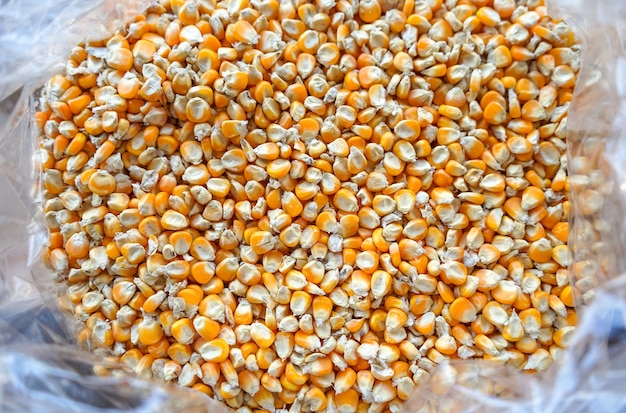 Close up de graines de maïs jaune dans un sac en plastique peut être utilisé comme arrière-plan