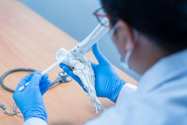 Close-up main porter des gants médicaux docteur en gants médicaux détient os artificiel du pied à l'hôpital.