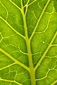 Close-up nerfs de feuille verte