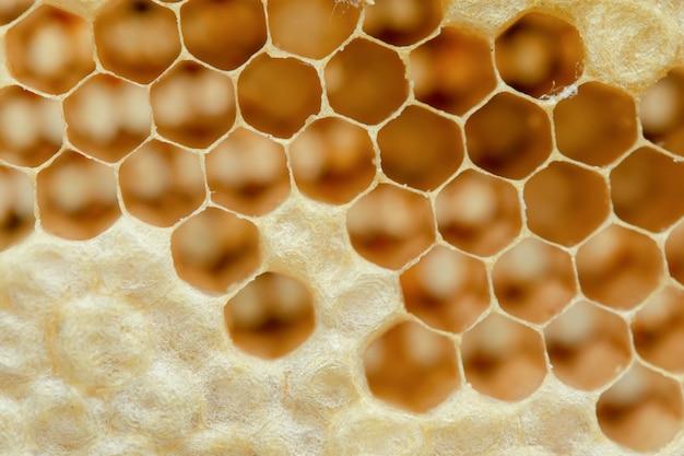 Close up nid en nid d'abeille