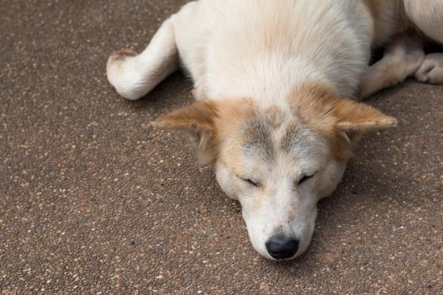Close up of dog sleep on ground stone floor floor