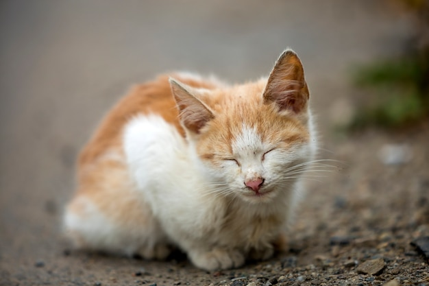 Close-up portrait of funny cute adorable ginger small white young cat kitten with closed eyes