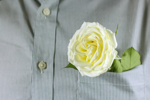 Close up rose blanche dans la poche de la chemise