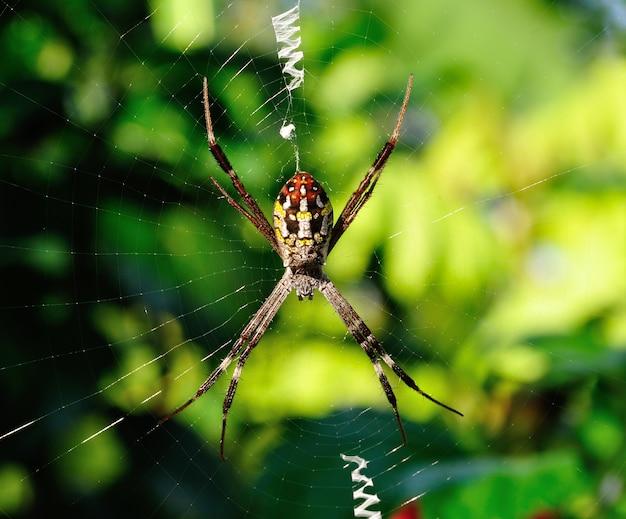 Closeup araignée dans sa toile