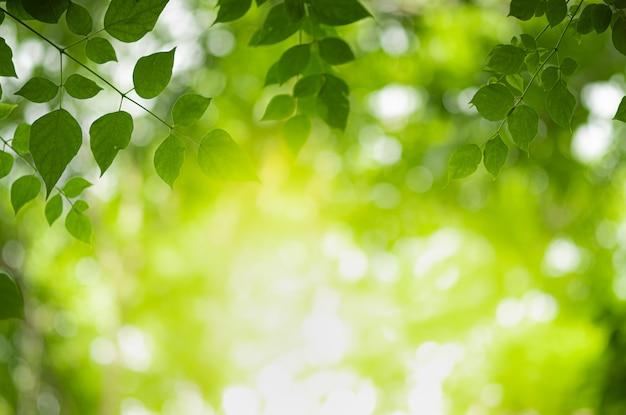 Closeup belle vue de nature feuille verte sur la verdure floue