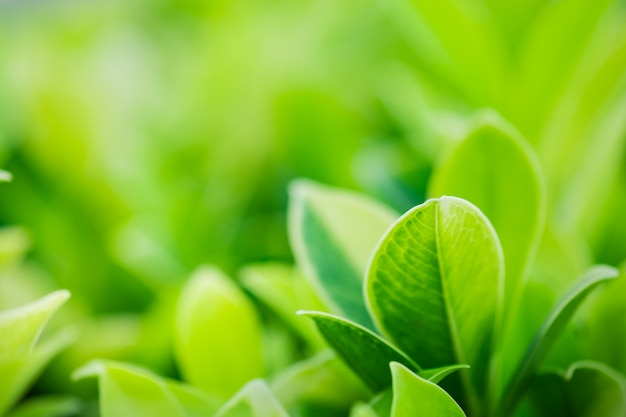 Closeup belle vue sur la nature feuille verte