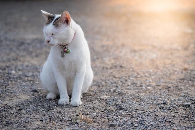 Closeup blanc chat mignon assis sur le sol rocheux et ferme les yeux avec la lumière du soleil orange