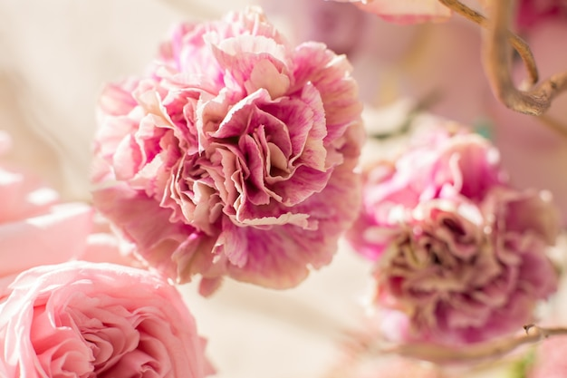 Closeup bouquet d'oeillets frais et rose.