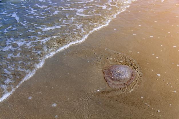 Closeup bouteille de déchets en plastique sur la plage, corbeille sur la plage de sable montrant le problème de pollution environnementale