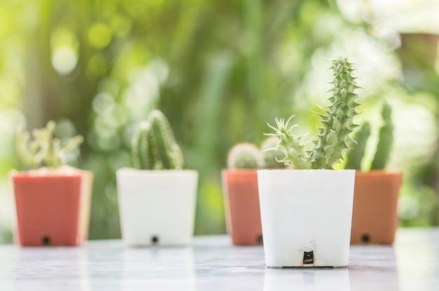 Closeup cactus dans un pot en plastique blanc sur la table de mable devant la maison