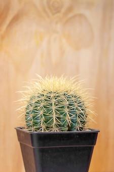 Closeup cactus sur le mur en bois