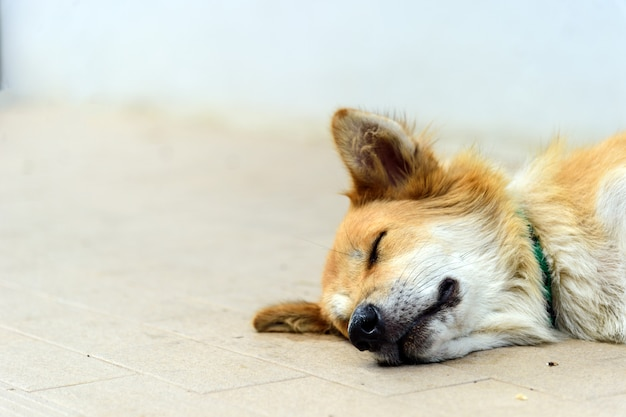 Closeup chiens errants dormant dans la rue