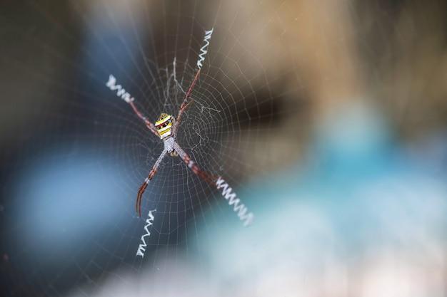 Closeup coloré araignée sur toile d'araignée