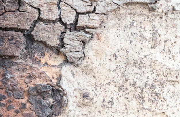Closeup craquelée peau de tronc d'arrière-plan de texture d'arbre