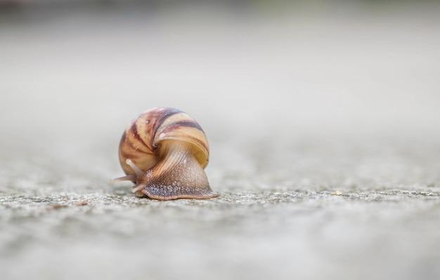 Closeup un escargot se déplaçant sur le sol de la rue dans le fond texturé extérieur