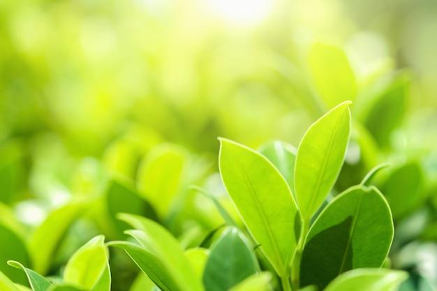 Closeup feuille verte sur le flou au parc