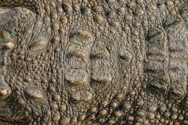 Closeup fond en cuir de crocodile, peau de crocodile