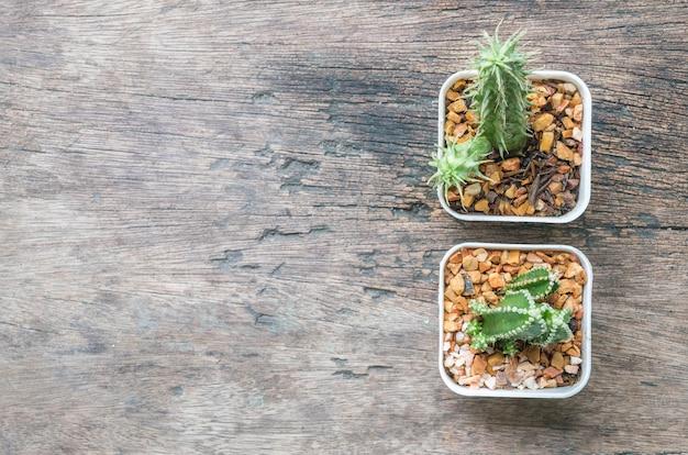 Closeup groupe de cactus dans un pot en plastique blanc sur fond de bureau en bois texturé en vue de dessus avec espace de copie