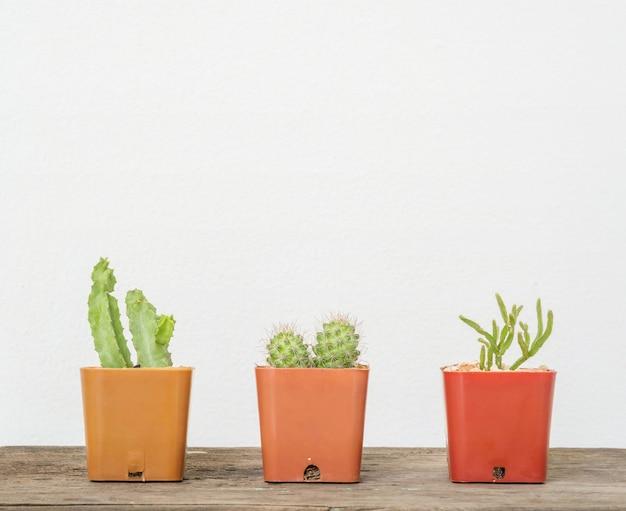 Closeup groupe de cactus dans un pot en plastique brun sur le bureau en bois floue et mur de ciment blanc fond texturé avec espace de copie