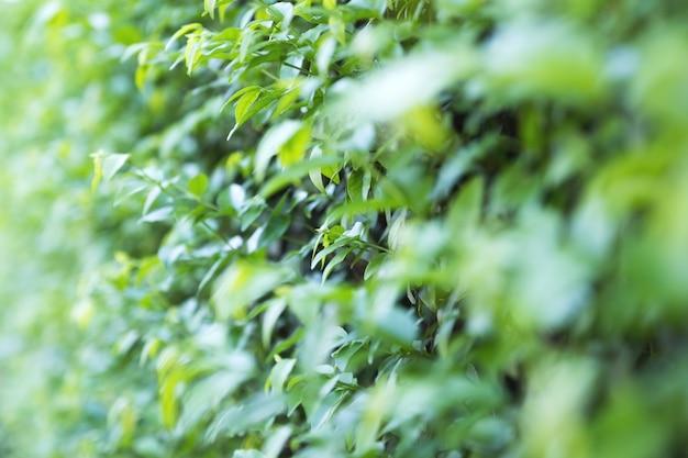 Closeup image de fond de feuilles vertes