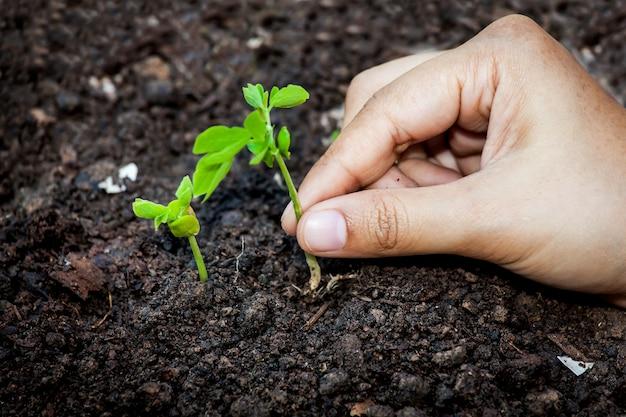 Closeup main plantation jeune arbre dans le sol, sauver le concept du monde