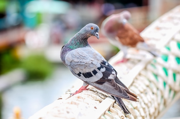Closeup marcro coloré oiseau pigeon tenir sur une main courante