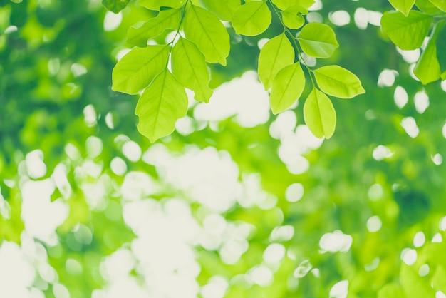 Closeup nature view of green leaves sur une verdure floue.