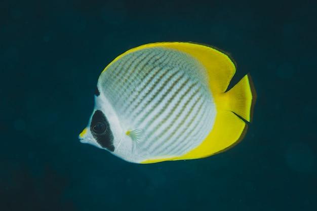Closeup d'un poisson tropical