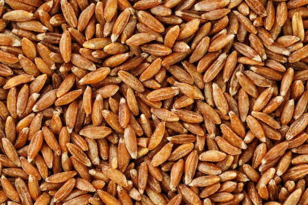Closeup riz brun au jasmin. texture de grain organique